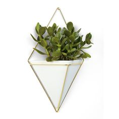 Umbra Trigg Hanging Planter Vase & Geometric Wall Decor Container - Great For Succulent Plants, Air Plant, Mini Cactus, Faux Plants and More, White Ceramic/Brass (Large) Grand Vase En Verre, White Ceramic Planter, Brass Planter, Ceramic Decor, Design3000, Decoration Plante, Vase Design, Mini Cactus, Support Mural