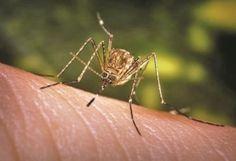 natural-mosquito-spray