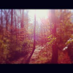 North Carolina Woods