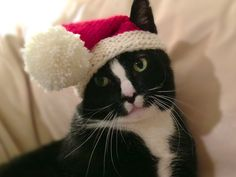 Knit Santa hat for cats - size 8 needles