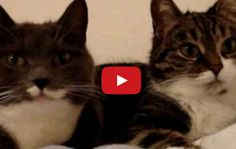 I Can't Believe The Mouths On These Two! What Are They Saying!? | The Animal Rescue Site Blog