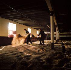 Balvenie  malt floor
