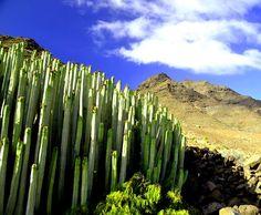 La Aldea de San Nicolás. Gran Canaria. Spain.