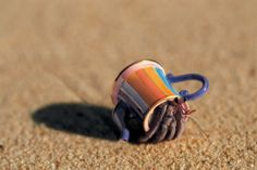 A new house for Hermit Crab?  From Cute Overload.com  I'm a Little Teapot, Trick or Treat…
