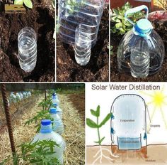 "Drip bottle irrigation Grow vegetables with 10 times less water with ""Solar Drip Irrigation."" This is how we can eliminate completely the evaporation losses!"
