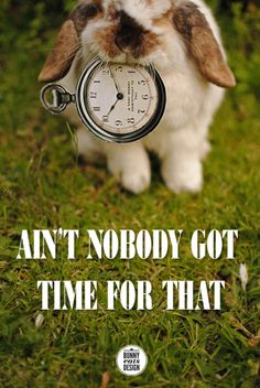 "If only it said, ""Ain't nobunny got time for that."""