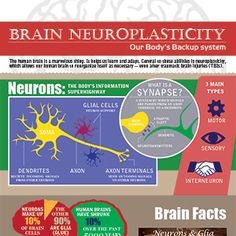 Neuroplasticity: The Remarkable Ability of Our Brain to Adapt