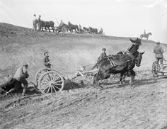Canadian Railway Troops using 'scrapers' and mules to prepare the ground during construction of a railway at Lapugnoy (near Bethune), 11 March 1918. Using mules and scrapers economised the numbers of man-hours needed to construct the railway.