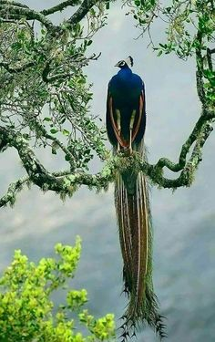 Collecting beautiful and amazing images of nature,flowers Pretty Birds, Love Birds, Beautiful Birds, Animals Beautiful, Nature Animals, Animals And Pets, Cute Animals, Wild Animals, Exotic Birds