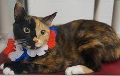 Cat Adoption Davidson County