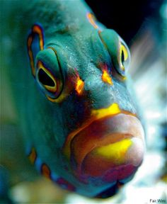 "Yep, cool fish in chill mode, looking like it's about to say ""hello"" Underwater Creatures, Underwater Life, Underwater Photos, Ocean Creatures, Colorful Fish, Tropical Fish, Ocean Aquarium, Fish Face, Cool Fish"