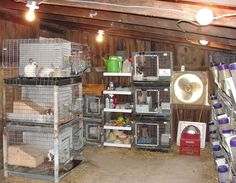 Cluttered. Gloomy. Tiny cages. Rabbit misery. Woodworking Guide, Custom Woodworking, Woodworking Projects Plans, Raising Rabbits For Meat, Meat Rabbits, Small Farm, Farm Life, Furniture Plans, Homesteading