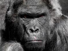 Huy Carajo: La sexta extinción ya está aquí