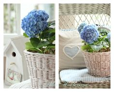 Blue Hortensia: Plava hortenzija i Iskrica sreće..