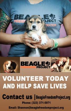We are in need of volunteers! Be part of history in the making saving lives and changing hearts and minds! We are in the North Hollywood area, please contact us if you are interested!