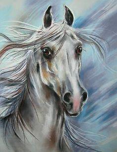 """Maja Wojnarowska. ~""""Portret siwego ogiera"""", rysunek pastel, konie"""