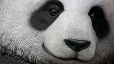 Google announced a new Panda Update that helps the search engine identify websites with low-quality content.
