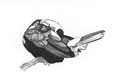 Sketch_toucan_26