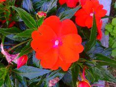 Flower orange.