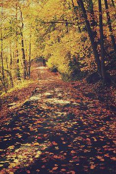 One October Morning by Kelli Seeger Kim, via Flickr