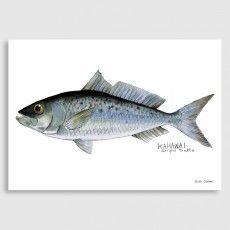 Kahawai Art Print by Giselle Clarkson