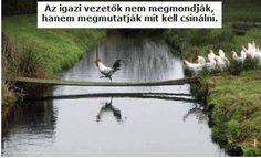 Gondold, végig milyen esélyeid vannak?  Megoldás mindig mindenre van, csak meg kell találni. Ne álmodozz, éld az álmodat!