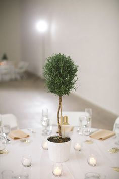 Rosemary topiaries for centerpieces :: photo by Love Me Do Photography