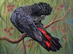 Nicky Shelton - Bird - Lenny Red Tail