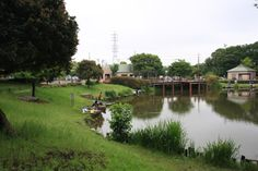 ONLY IN AUGUST ON HOT DRY DAYS 西城沼公園(埼玉県蓮田市)/公園へ行こう!