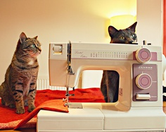 Anyone else have this problem? Cats seem to love sewing