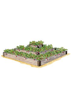 Strawberry Bed ~ This terraced planter is sized to fit 25 strawberry plants for a big yield in a small space. This attractive bed is also suitable for growing flowers, herbs and salad greens. Strawberry Beds, Strawberry Planters, Strawberry Garden, Strawberry Tower, Strawberry Patch, Raised Garden Beds, Raised Beds, Raised Planter, Garden Planner