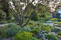 Lovely mix of colors and textures. Green and grey with pops of lime, blue, pink, and silver. The Beth Chatto Gardens - Scree Garden