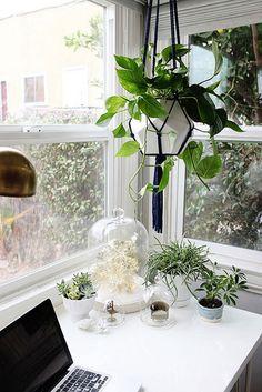 plants in Emily Henderson's office
