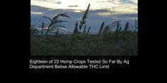 18 of 22 Hemp Crops Tested So Far By Ag Department Below Allowable THC Limit  #HEMP #VOTE http://blogs.westword.com/latestword/2014/10/hemp_crop_testing_colorado.php …
