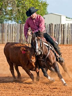Downunder Horsemanship | Training Tip of the Week: Gaining experience when time is limited