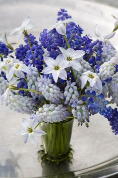 The freshness of blue and white Muscari with Ipheion 'Alberto Castillo'.