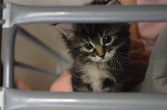 Xéna, chaton