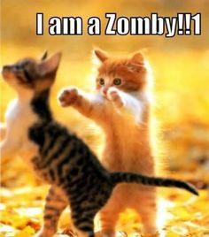 Cute Cats In Marshmallows Cute Kittens Live Cute Funny Animals, Cute Baby Animals, Funny Cute, Kids Animals, Hilarious, Cute Kittens, Cats And Kittens, Kitty Cats, Ragdoll Kittens