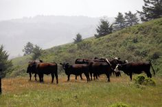 The TomKat Ranch sells grass-fed beef, but it began as a way to try to get carbon back into the soil.