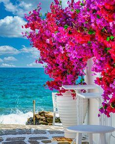 Beautiful Landscape Wallpaper, Beautiful Landscapes, Beautiful Images, Beautiful Flowers, Flower Background Wallpaper, Flower Phone Wallpaper, Flower Backgrounds, Beautiful Places To Travel, Wonderful Places