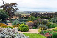 I want to go to the Australian garden right now.