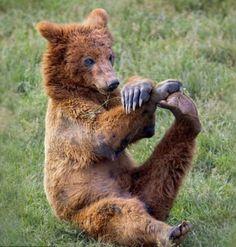 Os ursos tambem se alongam rsrsrs...:-)