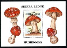 Sierra Leone 958, MNH, Mushrooms Fungi s6518