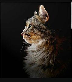 ❤ Melissa, my first cat 1972- 1992 ,,,,love,,,,,