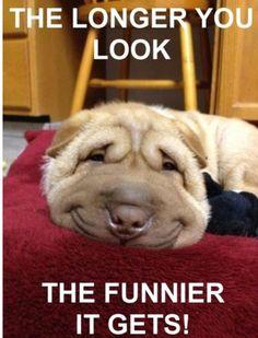 Keep looking it gets funnier.