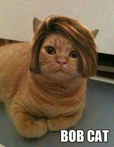 Bob cat!