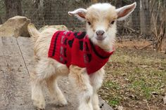 Help Build the Goats of Anarchy Rescue Farm!