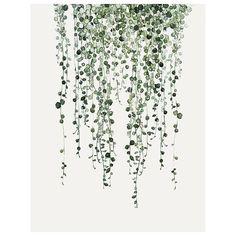 s t r i n g •  String of Pearls  #seneciorowleyanus #ss16preview #soononline #urbanbotanic #mydeerartshop