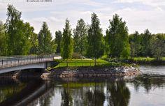 Kuusisaari, Oulu - Oulu silta Kuusisaari Oulujoki Oulujokisuisto jokisuisto pyörätie Toivoniemi Tuira toukokuu kevät kesä vihreä vehreä ulkoilu kaupunki kaupungissa kaupungin luonto kävelytie ulkoilureitti kevyen liikenteen väylä puu puut maisema kivetys vesi vesistö Pohjois-Pohjanmaa