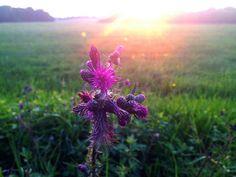 Abendstimmung im Bergischen Land   Flickr - Fotosharing!